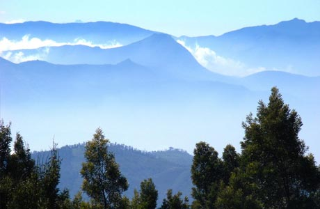 Nilgiris Blue Mountain