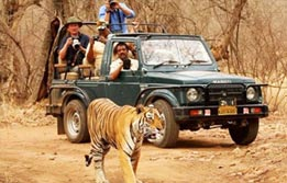 Wildlife Tour in Rajasthan